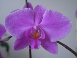 "<span  class=""uc-style-104247611899"" style=""color:#ffffff;"">Orchidee</span>"